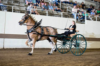 Belgian Registered Gelding Cart