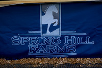 Spring Hill Farms Reduction & Retirement Sale