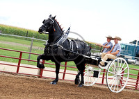 Shining Stars Percherons