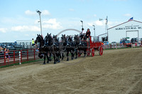 Hemmersbach Percherons