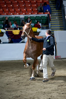 Class 43 Yearling Mare - Breeders Showcase